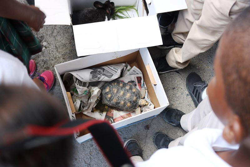 Land turtle in box.jpg
